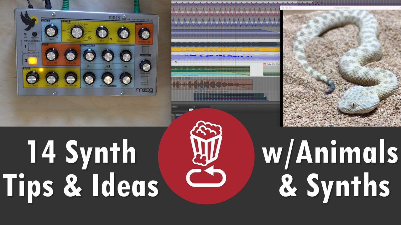 Animals and synths tips and ideas